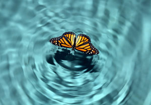 Butterfly flying over water